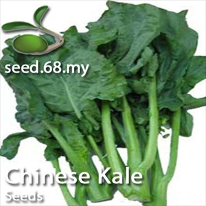 Chinese Kale Kailan Seed Malaysia Flower Seeds And Vegetable Seeds